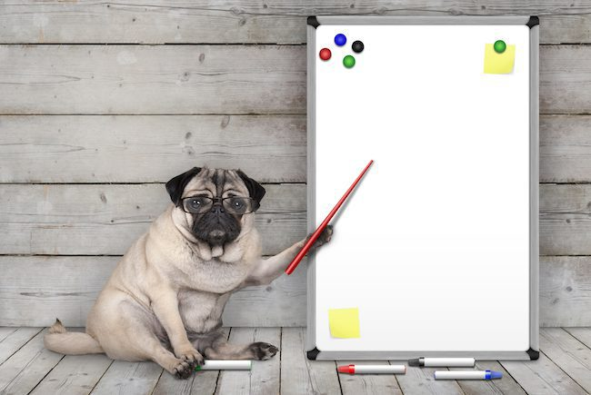 a dog points to a whiteboard
